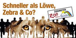 Zoolauf Salzburg 2014